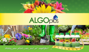 ALGOplus retains WSI to Expand Its Digital Marketing