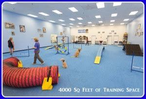 AZ Dog Sports Dog Training Phoenix AZ Gym